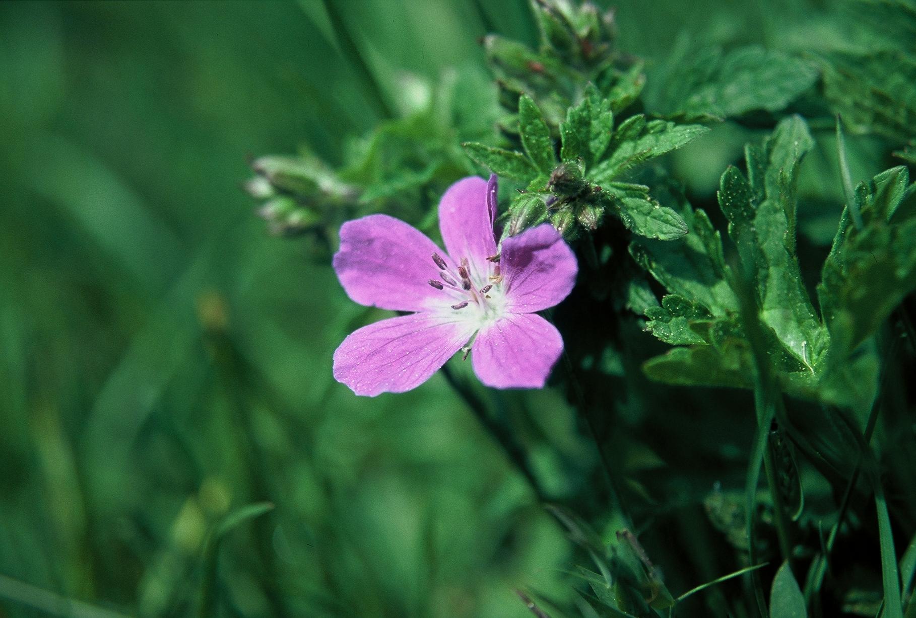 Retour site association valloire nature et avenir expo for Site de fleurs