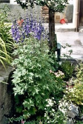 Jardin aux verneys 3 for Le jardin aux epilobes