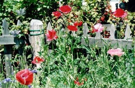 Jardin aux verneys 2 for Le jardin aux epilobes