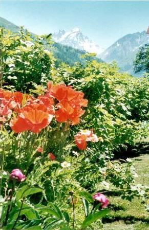 Jardin aux verneys for Le jardin aux epilobes
